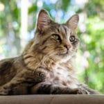 chat en bonne santé