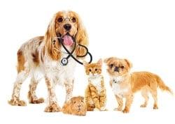choisir une mutuelle santé pour son animal de compagnie