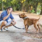 Comment assurer un chien « dangereux » ?