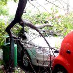 Que faire si un arbre ou une branche tombe sur votre voiture ?